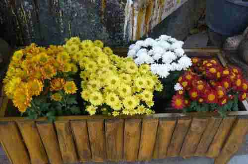jardiniere ou balconniere
