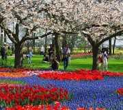 parc-printemps-keukenhof