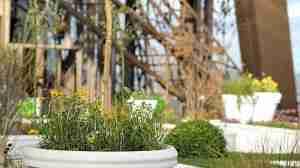 Plante dans un pot de yahourt