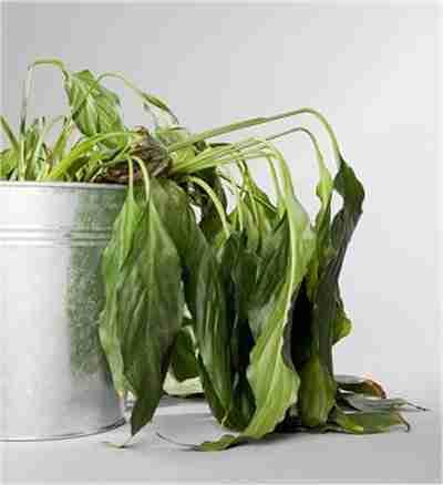 Plante abimée