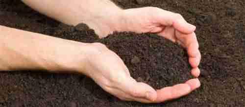 quelles plantes pour quel type de sol. Black Bedroom Furniture Sets. Home Design Ideas