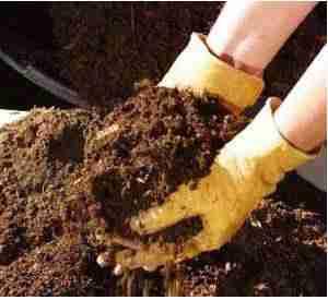 utilisez des engrais organiques