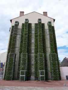 Mur végétal : Comment installer un mur végétal dans sa maison