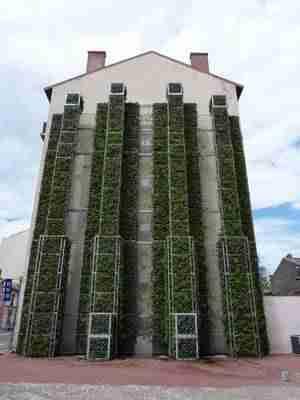 mur vegetalise sur maison