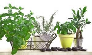 Plantes médicinales, herbes aromatiques