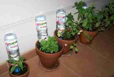 Arrosage plante bouteille - Arrosage automatique bouteille ...