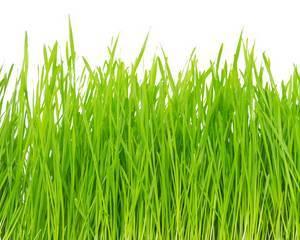 herbe tonte pelouse