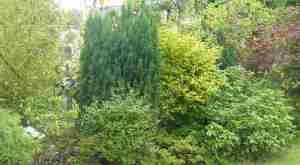 haie buissons