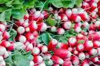 bottes de radis roses, comment les cultiver