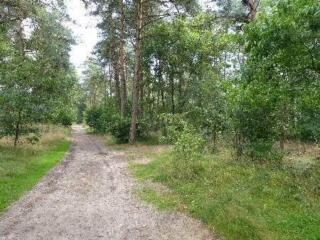 parc naturel du Veluwe, pays bas