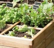 carré potager rempli de plantes aromatiques
