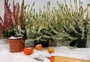 fleurs en hiver avec neige