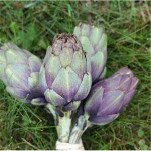 Artichaut violet de provence à récolter en octobre