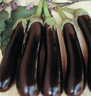 les aubergines sont a récolter en octobre