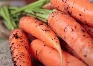 carotte, comment les conserver