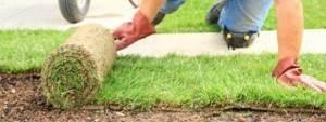 rouleau gazon pelouse à mettre en place par plaques
