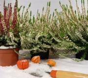 plantes en hiver avec de la neige dessus