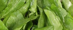 feuilles d'oseille