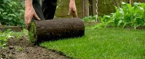 rouleau gazon pelouse
