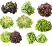 varietes de salades, jolie présentation