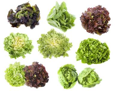 Graines de salade comment les r colter et les conserver - Variete de salade d hiver ...