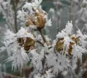 gel sur plantes