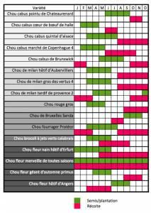 calendrier des semis et recoltes pour les différents choux