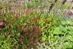 herbes sauvages jardin potager de l'abbaye de celles sur belle