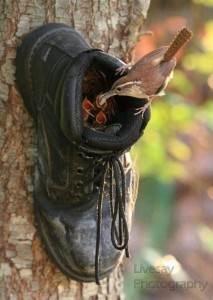 nichoir à oiseaux en forme de chaussure