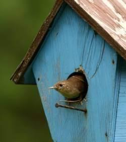 nichoir à oiseaux bleu avec oiseau dedans