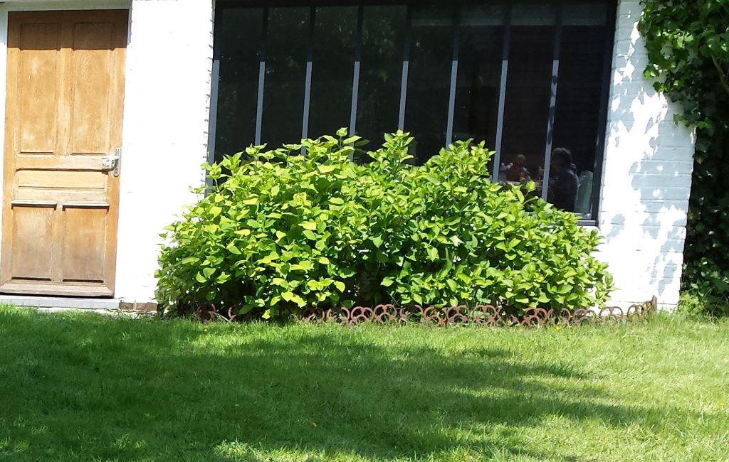 bordurette de jardin en acier