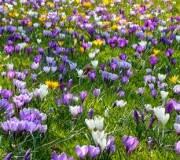 Jardiner en mars : joli parterre de fleurs