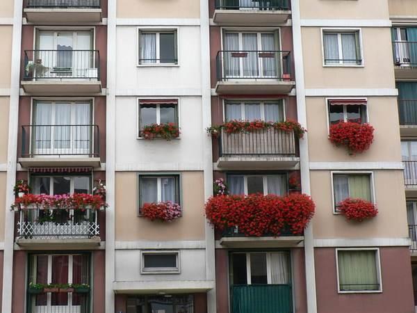 Fleurs aromates que planter sur son balcon au printemps - Que planter sur son balcon ...