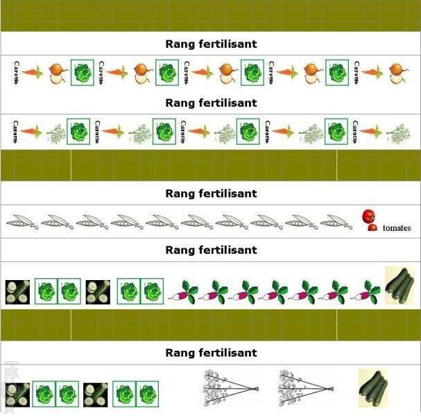 Exemples de plans de potager et de contenus de potager for Conseil de jardinier
