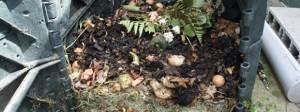 photo de compost