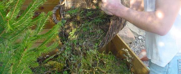 contenu du composteur : feuilles mortes, tonte de gazon