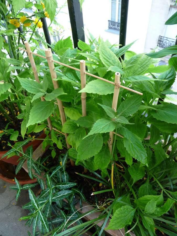 Tuteur pour potager en bambou - Faire pousser du bambou ...