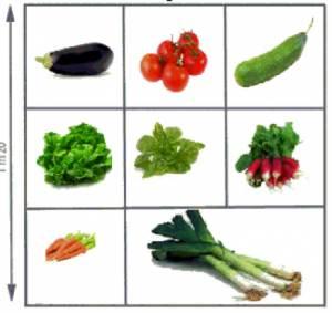 quels légumes dans le carré potager