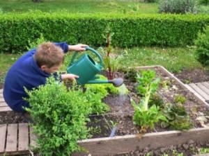 5 étapes pour installer votre carré potager : arroser