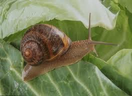 escargot sur une feuille verte
