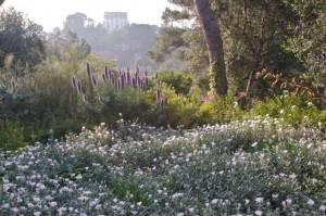 jardin provencal de la Villa Ephrussi de Rothschild