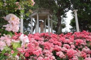 jolie roseraie de la Villa Ephrussi de Rothschild