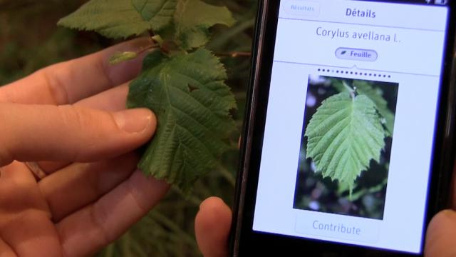 Pl@ntNet, application de reconnaissance des plantes et fleurs