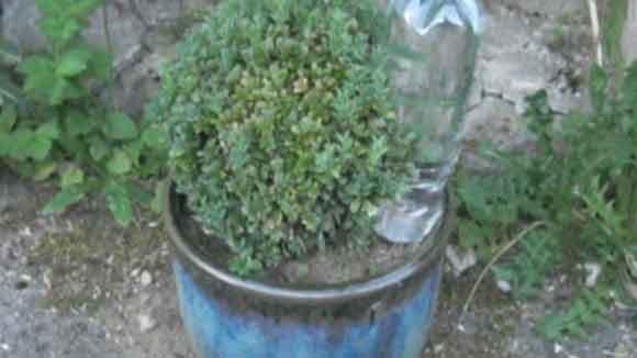 Comment arroser ses plantes grace à une bouteille