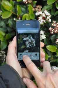 pla@ntNet application mobile de reconnaissance des plantes et fleurs