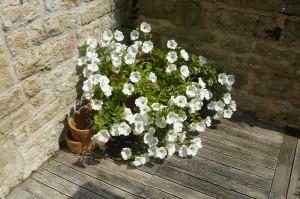 fleurs sur caillebottis