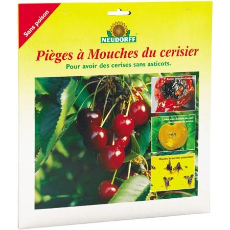 pieges a mouche pour les cerisiers - carton jaune avec glu
