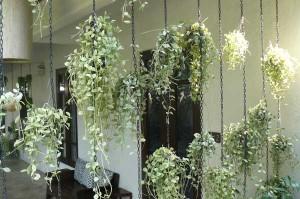 rideau de plantes tombantes pour balcon