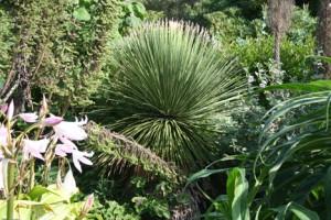 plantes exotique normandie