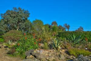 jardin botanique et exotique roscoff